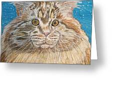 Maine Coon Cat Greeting Card by Kathy Marrs Chandler