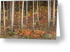 Majestic Autumn In The Grand Tetons Greeting Card by Sandra Bronstein