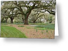 Majestic Live Oaks in Spring Greeting Card by Suzanne Gaff