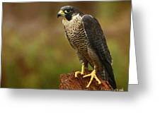 Majestic Peregrine Falcon In The Rain Greeting Card by Inspired Nature Photography By Shelley Myke