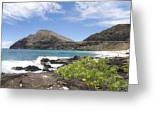 Makapuu Beach Greeting Card by Brandon Tabiolo
