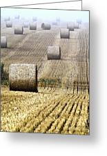 Make Hay While The Sun Shines  Greeting Card by Heiko Koehrer-Wagner