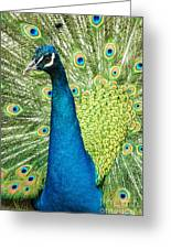 Male Indian Peacock Greeting Card by Darleen Stry