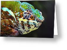 Male Panther Chameleon Furcifer Greeting Card by Thomas Kitchin & Victoria Hurst