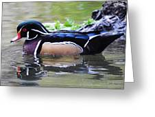 Male Wood Duck Greeting Card by DiDi Higginbotham