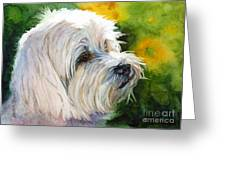Maltese Greeting Card by Bonnie Rinier