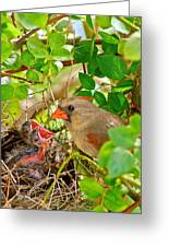 Mama Bird Greeting Card by Frozen in Time Fine Art Photography