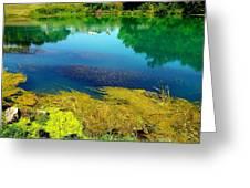 Mammoth Springs Water Vegetation Greeting Card by Cindy Croal