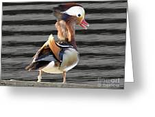 Mandarin Duck Greeting Card by Donna Brown