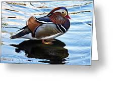 Mandarin Duck Greeting Card by Robert Bales
