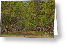Mango Orchard Greeting Card by Douglas Barnard