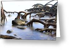 mangrove tree roots Greeting Card by Dirk Ercken