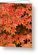 Many Leaves Greeting Card by Anne Gilbert