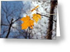 Maple On The Blue Greeting Card by Abril Gonzalez
