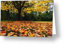 Maple tree - Fall color Greeting Card by Hisao Mogi