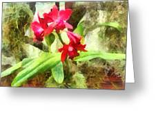 Maroon Cattleya Orchids Greeting Card by Susan Savad