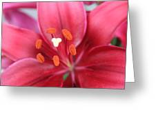 Maroon Lilies Greeting Card by Cary Amos