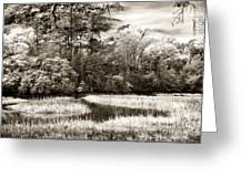 Marshes Greeting Card by John Rizzuto
