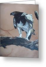 Martial Eagle Greeting Card by Robert Teeling