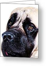 Mastiff Dog Art - Sad Eyes Greeting Card by Sharon Cummings