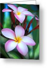 Maui Plumeria Greeting Card by Kathy Yates