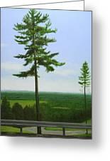 Mcgregor Pine Greeting Card by Paul Chapman