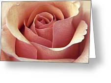 Mcintosh Greeting Card by Darlene Kwiatkowski