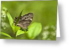 Meadow Butterfly Greeting Card by Christina Rollo
