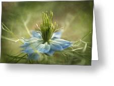 Medussa Greeting Card by Faith Simbeck