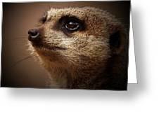 Meerkat 6 Greeting Card by Ernie Echols