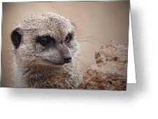 Meerkat 7 Greeting Card by Ernie Echols