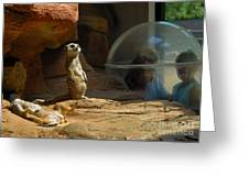 Meerkat Manners Greeting Card by Amy Cicconi