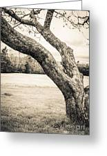 Meet Me Under The Old Apple Tree Greeting Card by Edward Fielding