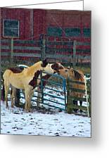 Meeting Of The Equine Minds Greeting Card by Julie Dant