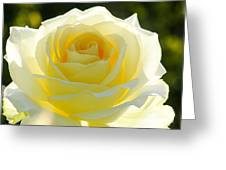 Mellow Yellow Rose Greeting Card by Sabrina L Ryan