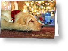 Merry Christmas From Lily Greeting Card by Lori Deiter