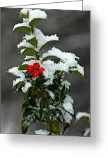 Merry Christmas Greeting Card by Raymond Salani III
