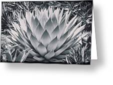 Mescal Agave Greeting Card by Kelley King