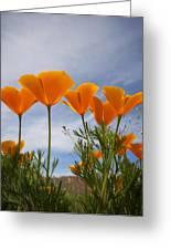 Mexican Poppies  Greeting Card by Saija  Lehtonen