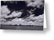 Midwest Corn Field Bw Greeting Card by Steve Gadomski