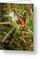 Milkweed Pod Greeting Card by Steve Harrington