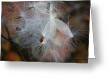 Milkweed Seed Greeting Card by Steph Maxson