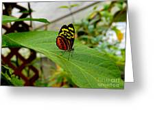 Mindo Butterfly Poses Greeting Card by Al Bourassa
