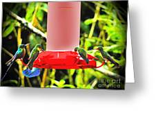 Mindo Hummer Gathering Greeting Card by Al Bourassa