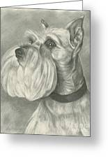 Miniature Schnauzer Greeting Card by Lena Auxier