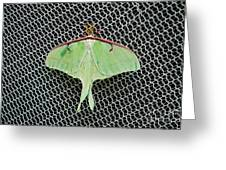 Mint Green Luna Moth Greeting Card by Andee Design