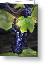 Mission Grapes II Greeting Card by Sharon Foster