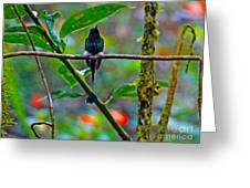 Mister Santa Pants II   Mindo Hummingbird Greeting Card by Al Bourassa