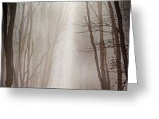 Misty forest Greeting Card by Dobromir Dobrinov