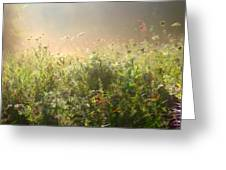 Misty Morning Greeting Card by John Robichaud